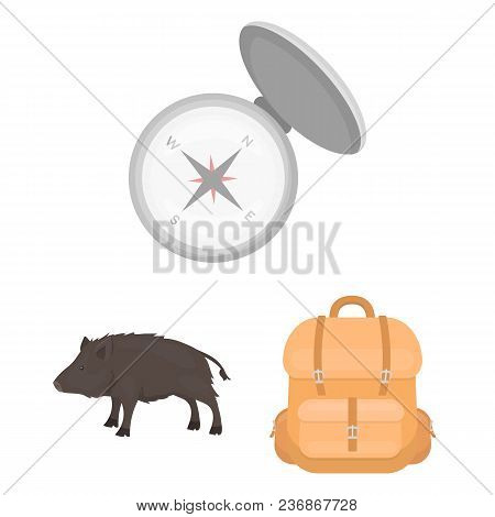 Hunting And Trophy Cartoon Icons In Set Collection For Design. Hunting And Equipment Vector Symbol S