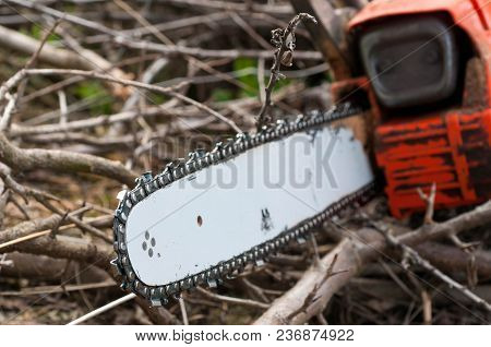 Used Sharp Chain Saw On Tree Branches On Natural Light.