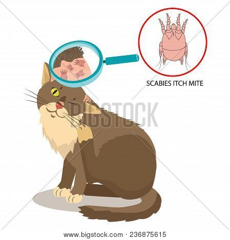 Parasite Of The Skin. Cat Parasites Vector. Itch Mite. Sarcoptes Scabiei. On Cat In The Fur As A Clo