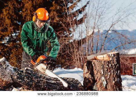 Close-up Of Lumberjack Worker With Chainsaw In His Hands Saws Fallen Tree, Chips And Dust Fly Upward