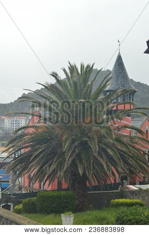 Beautiful Spiral House With A Battlement Behind A Beautiful Palm Tree In The Port Of Lekeitio. March