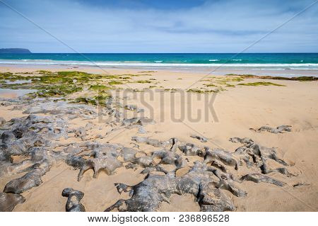 Coastal Stones On Sandy Beach Of Porto Santo Island In Summer Day. Madeira Archipelago, Portugal