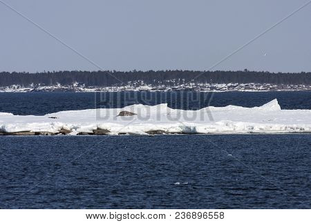 Coast, Coastline, Islands And Shore Of The Baltic Sea In April. Forest And Ridges In The Background.
