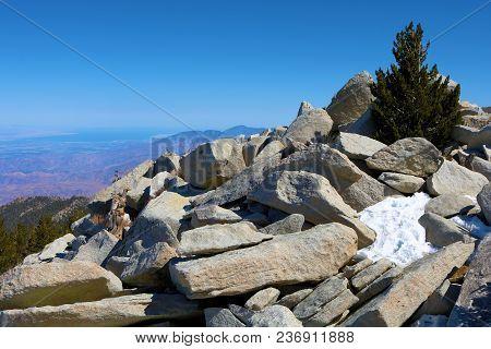 Rugged Rocky Terrain With Alpine Pine Trees Overlooking The Desert Taken At Mt San Jacinto Peak, Ca