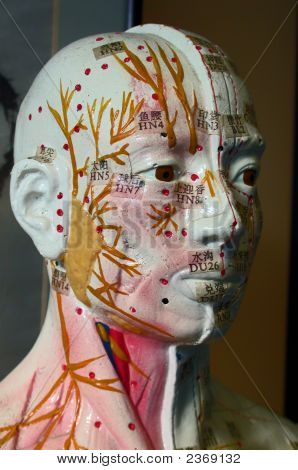 Acupuncture Model In Colour