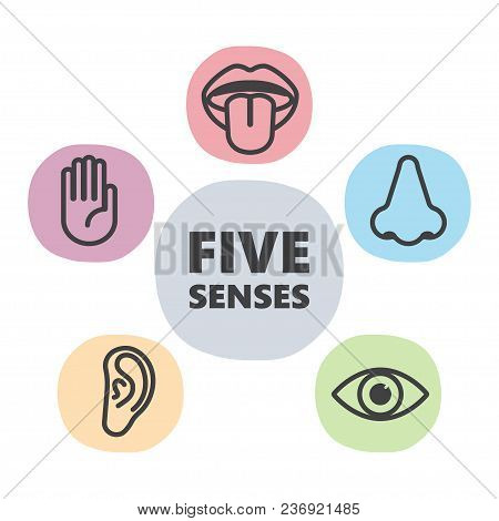 Icon Set Of Five Human Senses. Touch, Smell, Hearing, Vision, Taste Vector Illustration