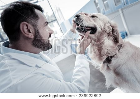 In The Vet. Professional Nice Smart Man Holing Dogs Head And Looking Into The Mouth While Checking D