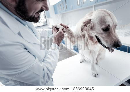 Doctors Checkup. Pleasant Nice Cure Dog Sitting On The Table And Giving Her Paw While Having Doctors