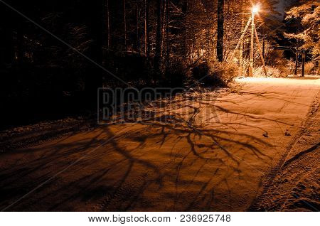 Night Winter Landscape. Glowing Lamppost Illuminates The Snowed Branches Trees. Shadows On The Road.