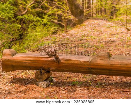 Closeup Of Park Bench Carved From Log In Woodland Park Area On Warm Sunny Afternoon.