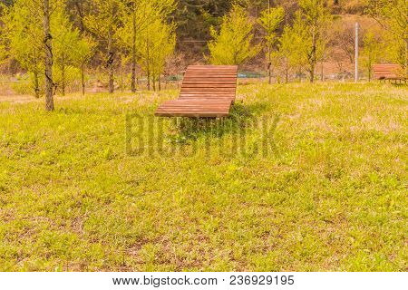 Chase Lounge Park Bench In Woodland Park With Green Lawn On Sunny Afternoon.