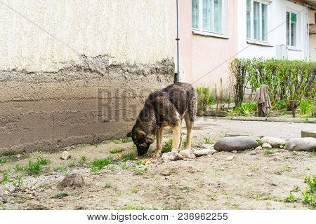 A Homeless Dog On A City Street