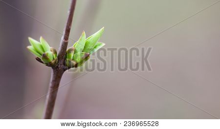 Simplicity Conceptual Photo. Beautiful Soft Tender Spring Tree Branch Green Leaf Bud. Shallow Depth