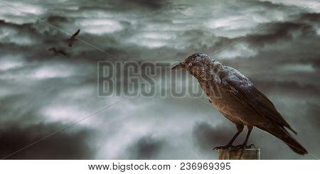 A Black Bird In Watching Desolated Sky