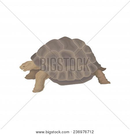Turtle Wild African Animal Vector Illustration Isolated On A White Background.