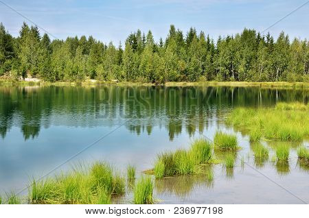 Mixed Forest On The Shore Of A Deserted Lake