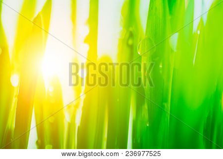 Bright Sun Light Coming Through The Fresh Vibrant Spring Green Grass.