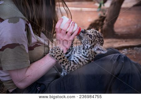 Girl Feeding Small Young Cute Cheetah. People And Animals In Love