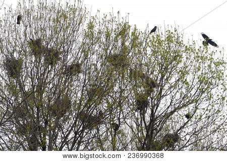 Raven Nests In Tree Crochet With Ravens Fly