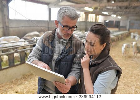Sheep breeder with veterinary in shed using digital tablet