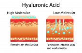 Vector illustration with Hyaluronic acid in skin-care products. Low molecular and High molecular. isolated poster
