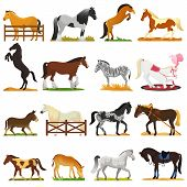 Cartoon horse vector cute animal of horse-breeding or equestrian and horsey or equine stallion illustration animalistic horsy set of pony zebra character isolated on background. poster