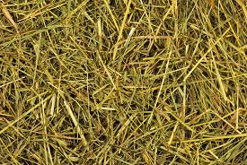 Image Of Hay As A Background Closeup