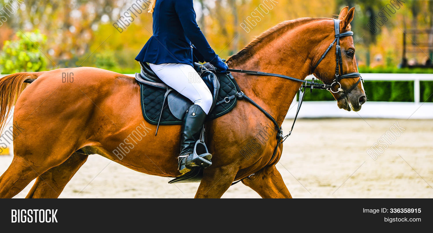 Horse Rider Uniform Image Photo Free Trial Bigstock