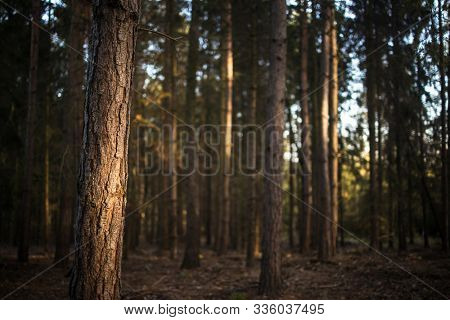 Lovely late summer forest landscape with warm evening sunlight backlighting the trees