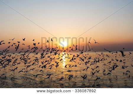 Group Of Seagulls In Flight Over The Beach.gull Bird Flying Hover Come Around To Eat On Beautiful Tw