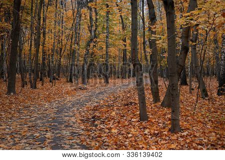 Old Park With A Path, With Fallen Leaves And Yellowed Leaves On The Trees
