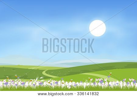 Panorama Landscape  Of Spring Green Field On Hills With Blue Sky, Vector Cartoon Spring Or Summer La