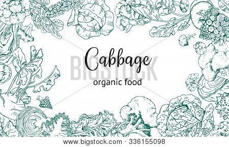 Rectangular Frame Design Template With Different Cabbage. Hand Drawn Outline Vector Sketch Illustrat