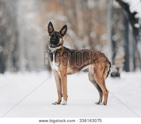 One Eyed Mutt Dog Standing Outdoors In Winter