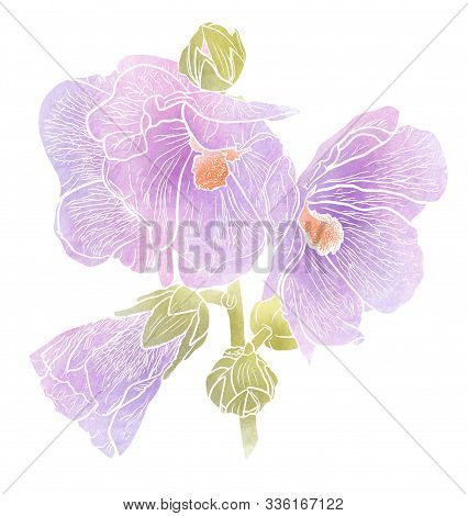 Hollyhock Flowers Isolated On White Background. Mallow Blossom. Romantic Summer Image. Hand Drawn Il