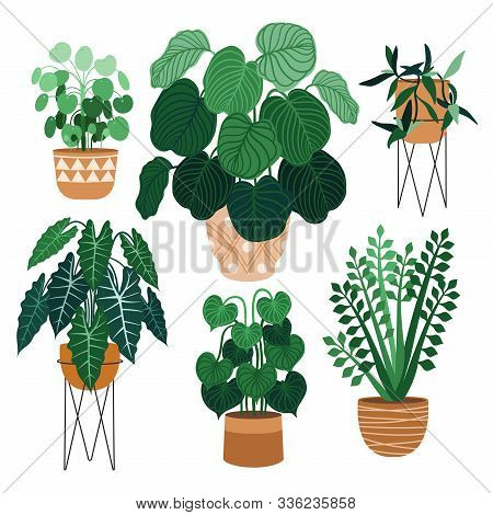 Indoor Plants Flat Color Illustrations Set. Realistic Houseplants In Beige Pot On Metal Stands. Exot