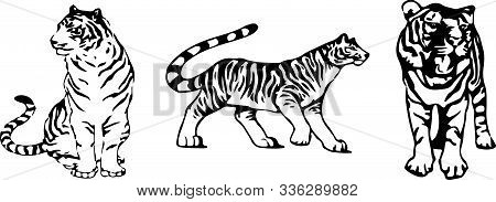 Tiger Vector On Color Background Wildcat, Wildlife, Zoo