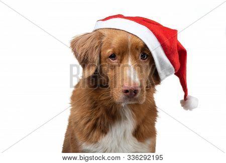 Christmas Dog Pet New Image Photo Free Trial Bigstock