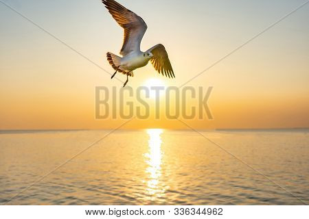 Lonely Seagull In Flight Over The Beach.gull Bird Flying Hover Come Around To Eat On Beautiful Twili