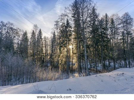 Winter Dawn.frosty Winter Morning. Bright Sun Rays Make Their Way Through The Trees.