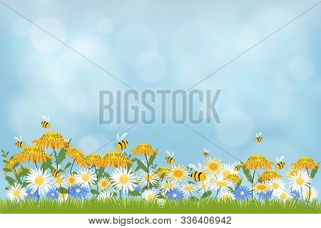 Vector Illustraion Spring Nature Background, Blue Sky, Green Grass And Chamomiles Field. Landscape O