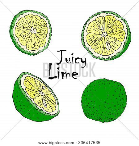 Vector Color Illustration With Lymes . Slice, Half, Whole Lime. Set Of Hand-drawn Doodle-style Eleme