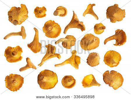 Chanterelle Mushrooms Collecton Of Isolated Mushrooms On White Background. Set Of Eatable Mushrooms