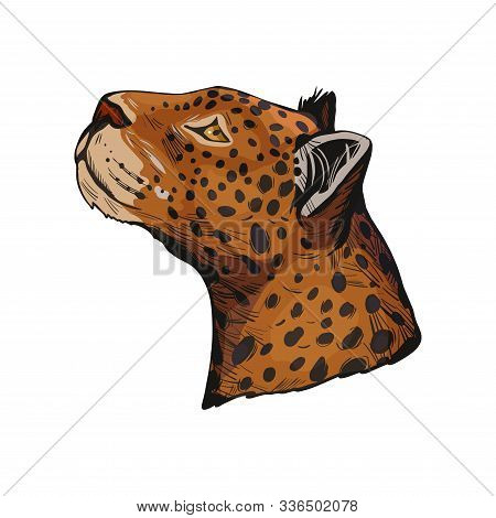 Leopard Portrait Of Exotic Animal Isolated Vector Illustration Sketch. Profile Of Panther Looking As