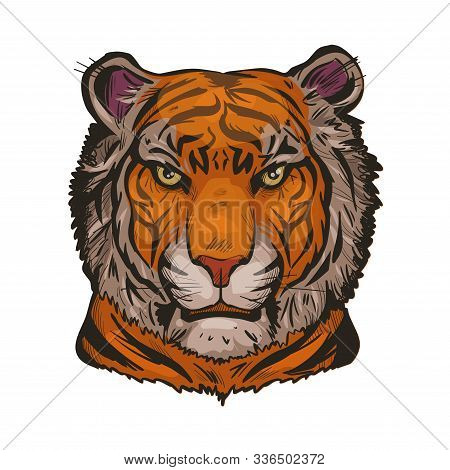 Tiger Portrait In Closeup Isolated Vector Illustration Sketch. Hand Drawn Panthera Tigris, Wild Cat
