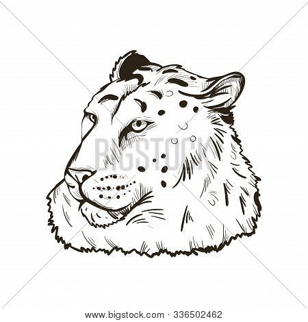 Leopard Portrait Of Exotic Animal Isolated Vector Illustration Sketch. Monochrome Profile Of Panther