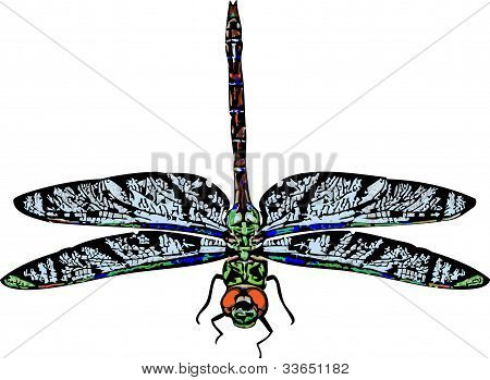 Green Darner Dragonfly Illustration
