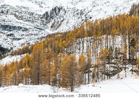 Rock Mountains And Pine Forest Covered By Snow, Trees Change Color To Orange In Winter Of Furi, Zerm