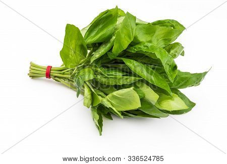 Bouquet Of Fresh Basil Leaves. Isolated On White Background.