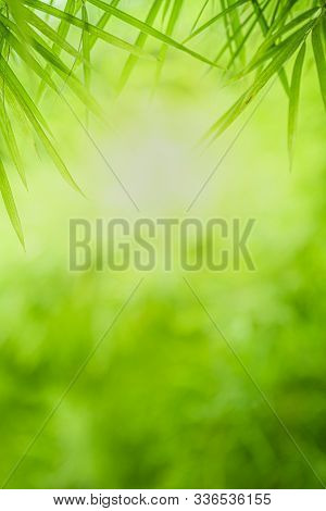 Closeup Beautiful View Of Nature Green Bamboo Leaf On Greenery Blurred Background With Sunlight And